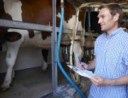 ХАССП в молочном производстве